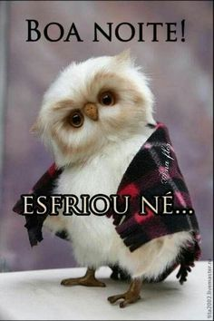 Boa Noite... Cute Funny Quotes, Happy Wishes, My Emotions, Holidays And Events, Good Night, Animals And Pets, Cute Babies, Harry Potter, Kawaii