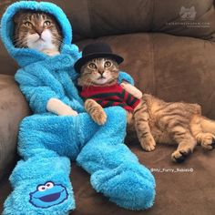 From @my_furry_babies: Halloween is coming  My CookieMonster & little Freddy Kreuger watch out for those claws!!  #catsofinstagram [source: http://ift.tt/2dCdbEJ ]