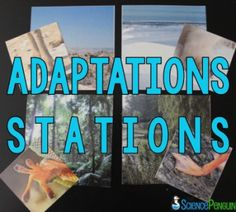 Adaptations Stations- 9 fun stations to help students practice identifying structures and functions of structural adaptations (from The Science Penguin) $