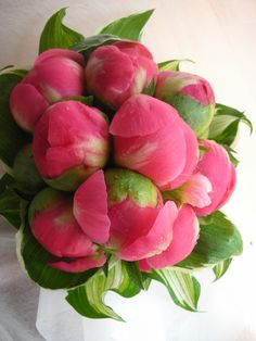 peonies - http://love-food-sex.blogspot.com/2013/01/on-fragrance.html