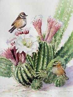 Cactus Wren by gabriele baber Watercolor ~ 11 x 14