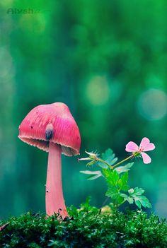 Pink mushroom & flower in moss ~AlyshArt on deviantART