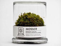 Mosser : The starter terrarium.