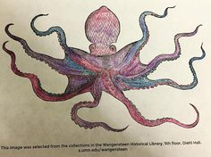 Love that this is #colorourcollections week. Super cool octopus at the #Wangensteen collection. by tailorkw