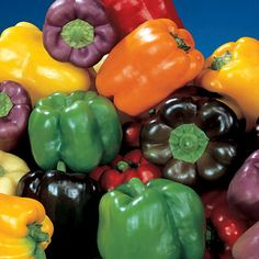 Each color has its own distinctive flavor! Here's what you get -- white, yellow, orange, red, lilac, purple, and chocolate!  65 to 70 days. Now you can enjoy sweet bell peppers in all the glorious colors and flavors available today We have hand-blended, exclusively for Park customers, a mix of the finest variety of each color. Consisting of 5 hybrids and 2 open-pollinated types, this mix assures you of big, thick-walled, blocky bells in every color.