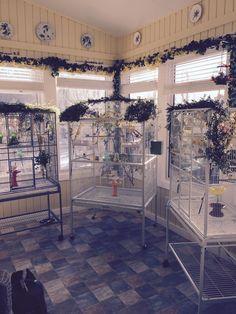 Clover Sprouts Foto Royalty Free, Immagini, Immagini E Archivi ...