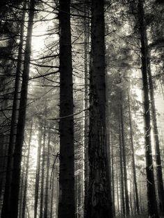 Thuringia by Fabio Orsi, via Behance