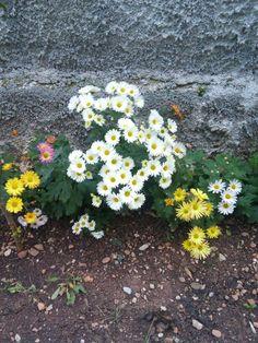 Winter Flowers!