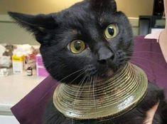 Esta gata se ha convertido por accidente en un icono de la moda
