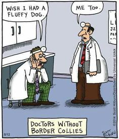 *doctors without border collies*