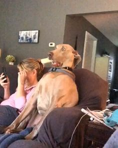 Hilarious moment a shocked pooch stares off into space after something caught his attention Funny Dog Videos, Funny Animal Memes, Cute Funny Animals, Funny Animal Pictures, Cute Baby Animals, Funny Cute, Funny Dogs, Cute Puppies, Cute Dogs