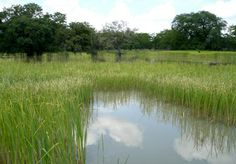 Parque Nacional da Mupa, Província Cunene - Angola