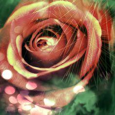 Rose by artfanning.deviantart.com on @deviantART