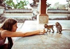 baby monkeys.