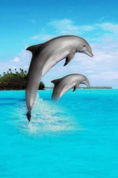 i love dolphins theyre so playful and just enjoyable!