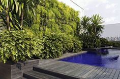 """O paisagista Luiz Carlos Orsini criou a parede verde na lateral da piscina, com liríopes, trepadeira falsa-vinha e aspargos. Instalou o espelho escuro que reflete o skyline. Dracenas arbóreas """"camuflam"""" os prédios próximos, enquanto filodendros xanadu margeiam a parede verde, contraponto ao preto do deque. Espaço surpreendente, no 20º andar."""