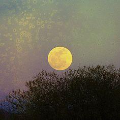 la luna  (via clavicola)