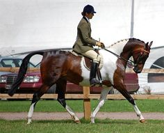 1000 Images About National Show Horse On Pinterest Show