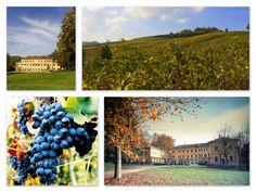 The HOME of Pinot Noir - Villa Fornace & Cantina Conte Vistarino