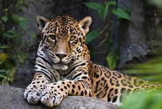 8 Things to Do in Houston With Kids | Houston Zoo