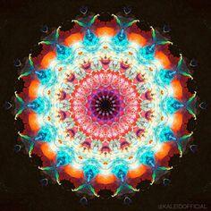 F L O W  #kaleidofficial  #kaleidoscope #kaleidoscopic #mandala #mandalaart #zentangle #zentangles #symmetry #symmetricart #trippy #trippyart #psychedelic #psychedelicart  #mirrorlab #modernart #abstract #abstractart #abstractexpressionism #fluidart #acrylicart  #digitalart #digitalpainting #visualart #thegraphicspr0ject  #fa_hypnotic  #art_sanity  #fractal #fractals #meditation #spiritual