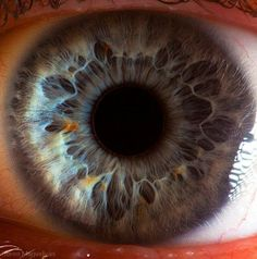 # The iris of a human eye has two layers of fibers, radial fibers that pry the pupil open and sphincter fibers that snap it shut.  Photo by: Suren Manvelyan