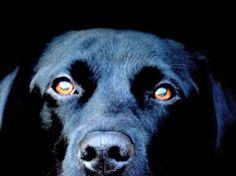 Extrañas apariciones de los perros negros.