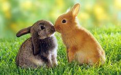 super schattige konijntjes