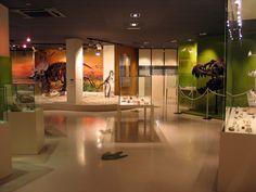museo paleontológico de Elche - En este museo se recrea el gabinete de estudio de Pedro Ibarra Ruiz, arqueólogo, archivero y bibliotecario de principios del siglo XX, pionero investigador de la arqueología y paleontología en la ciudad. En otras salas se expone de forma cronológica una muestra de las etapas en las que se ha dividido la Prehistoria con exhibición de fósiles y réplicas de cráneos humanos. El museo cuenta con una sala de exposiciones temporales así como de una colección de…