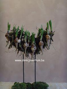 .: december 2011 December, Plants, Plant, Planets