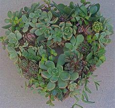 DIY SUCCULENT WREATH heartshape wreath 65 by Succulentsplus