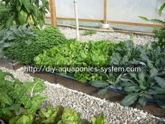 indoor hydroponic garden - fish growing tanks.home aquaponics systems for sale 9191311823