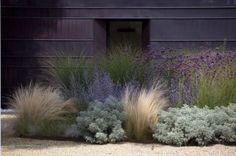Designing with Ornamental Grasses - Cape Contours