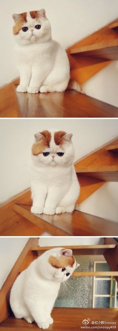 Top 30 Cutest Cats Pictures Snoopy Cat Top 30 Cutest Cats Pictures The post Top 30 Cutest Cats Pictures Snoopy Cat appeared first on Katzen. I Love Cats, Crazy Cats, Cool Cats, Baby Animals, Funny Animals, Cute Animals, Pretty Cats, Beautiful Cats, Cute Kittens