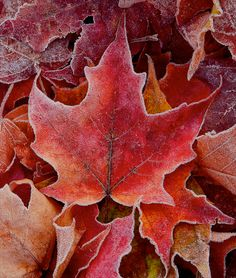maple leaves and other landscape photos by Mike Putnam