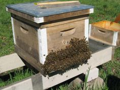 This site has a vast amount of information for beginning beekeeping.  {on first page, click on 'home' to get to the articles}
