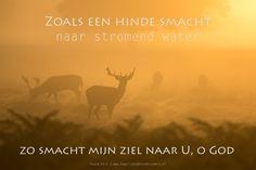 Zoals een hinde smacht naar stromend water, zo smacht mijn ziel naar U, o God. Psalm 42:2  #God, #Hart, #Kracht  https://www.dagelijksebroodkruimels.nl/psalm-42-2-4/