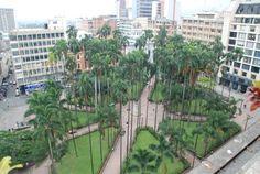 Plaza de Caycedo y sus hermosas palmeras.