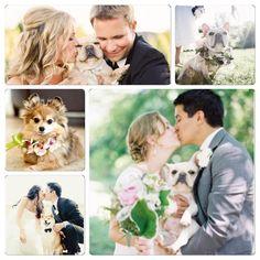 Aimez-vous l'idée de faire participer vos animaux à votre mariage??