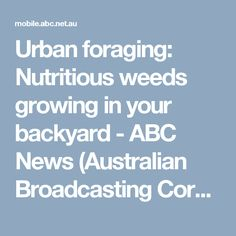 Urban foraging: Nutritious weeds growing in your backyard - ABC News (Australian Broadcasting Corporation)
