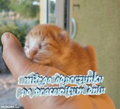 Wierszyki i gify na dobranoc: Gify na dobranoc kotki Cats, Animals, Dog Love, Animais, Gatos, Animales, Kitty Cats, Animaux, Cat Breeds