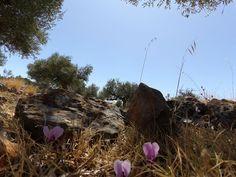 επι-δεξιος (ψάλτης): Περνώντας από τους Δολούς της Μάνης!!! Plants, Plant, Planets