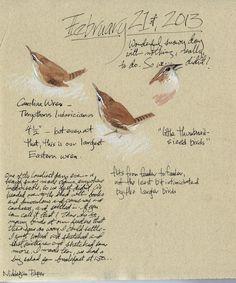 Carolina wren sketch ~ artist Cathy Johnson  #art #journal