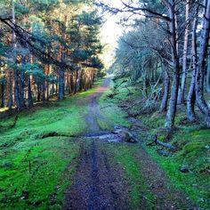 Bosque de San Antón en Rodiezmo #León