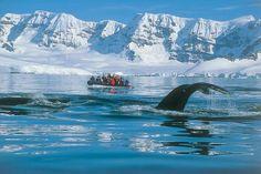 Explore Antarctica with Aurora Expeditions. #AuroraExpeditions #Cruises #Antarctica