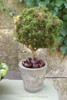 Moss topiary with chestnuts