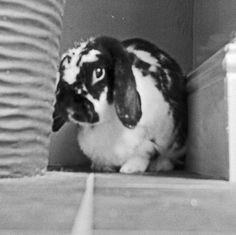 Baxter Bunny Rabbit and Vase.  © Chris Trew / Plastic Cameras 2012