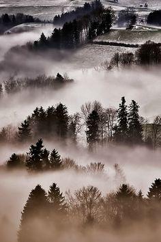 Dans la brume/ by Ricardo Gomez A.