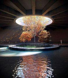 Architecture sublimant la Nature, arbre, toit, lumière, plafond bois fenêtre ronde, percée ciel @rendermobdesigners