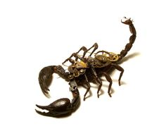 Unique Steampunk Insects